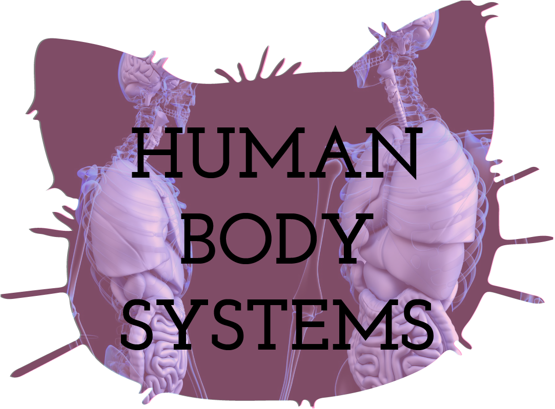 Human Body Systems Teaching Resources
